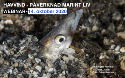 Havvind – Påvirkning marint liv